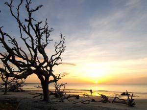 Driftwood Beach, Jekyll Island