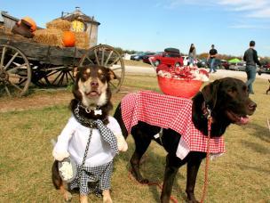 Dog Daze at the Maze costume contest
