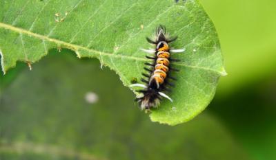 Friendship Botanic Gardens caterpillar