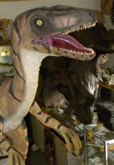 A full size model of Velociraptor will be on display at the 2012 show.