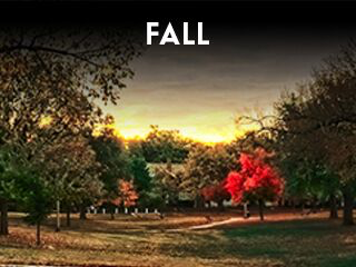 Widget - Annual Events - Fall