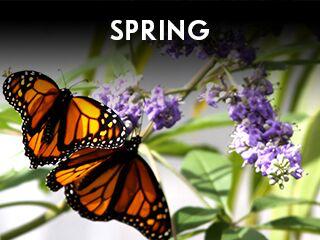 Widget - Annual Events - Spring