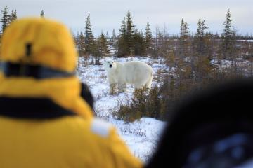 Great Ice Bear Safari