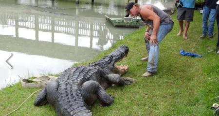 Beaumont's Big Texas: Alligator