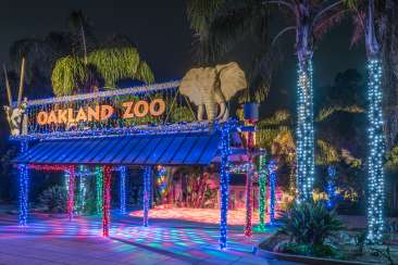 ZooLights: Oakland Zoo