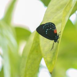hershey-gardens-butterfly