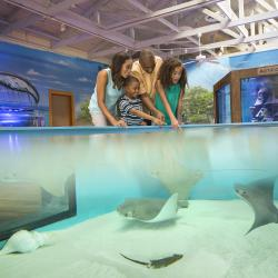 Family Friendly Activities Marine Science Center Blog