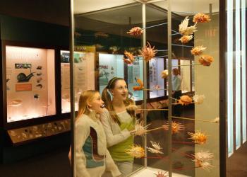 Delaware Museum of Natural History - Exhibit