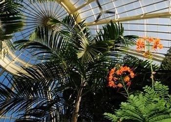 Buffalo and Erie County Botanical Gardens Photo Courtesy of Botanical Gardens