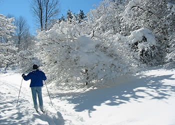Buffalo Cross Country skiing - Photo by Ed Healy