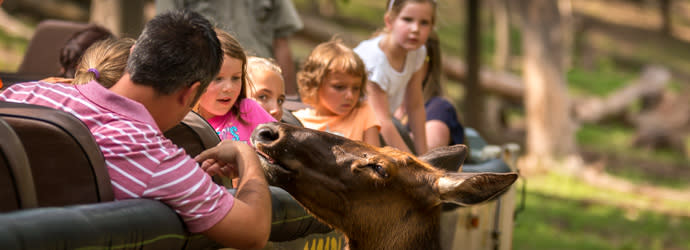 Safari Tour at Lake Tobias Wildlife Park in Visit Hershey Harrisburg