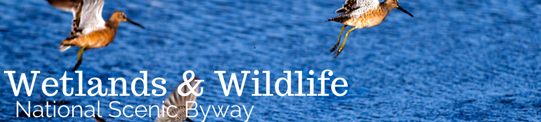 Wetlands & Wildlife Byway