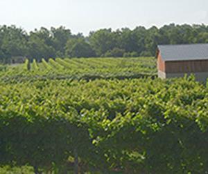 Talon Winery & Vineyards