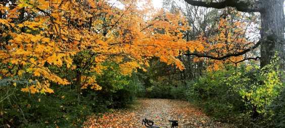 Indian Creek Trail Fall