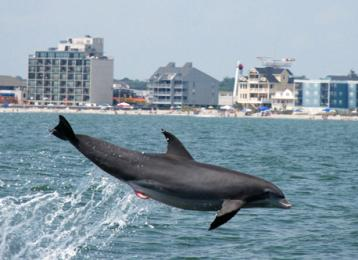 Blue Wave Adventures Dolphin Watch Tour