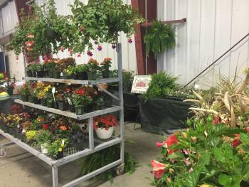 Gardening for All Ages offers a number of plants for sale.