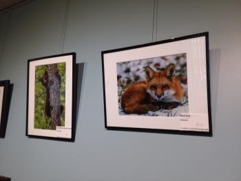 Come see photos by Jackie Curts Photography during the month of April at McCloud Nature Park Nature Center.