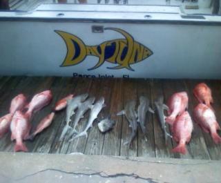 Daytuna Fishing Charters, Inc.
