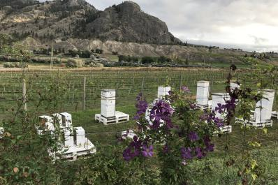 Honey Bees at Monte Creek Ranch