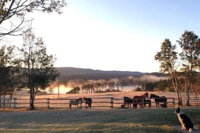 horses waiting at the gate early morning