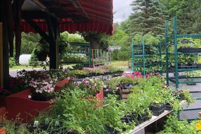 Eberhardts Fresh Pickins Plants