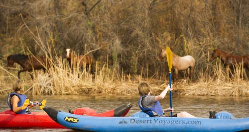 kids kayaking with horses on salt river