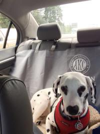 Day Trip: Seattle Southside's Dalmatian Dog Goes to Portland