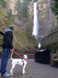 Day Trip: Seattle Southside's Dalmatian Dog Goes to Portland: Multnomah Falls