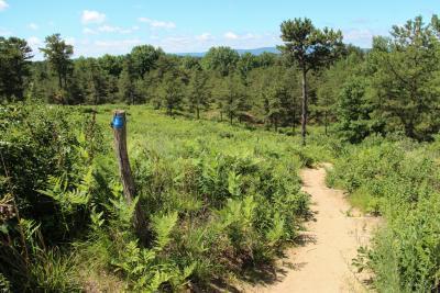 Albany Pine Bush