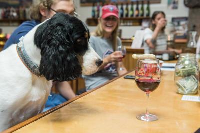 Dog at Hazlitt Vineyards