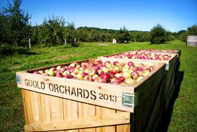 Goold Orchards
