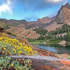 Wildflowers along the trail going strong into mid-August, photo by Kyle Jenkins