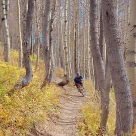 Quaking aspen grove on the Wasatch Crest Trail, photo by Brant Hansen
