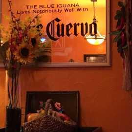 Blue Iguana_1