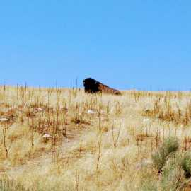 Antelope Island State Park_1