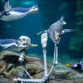 Haunted Aquarium