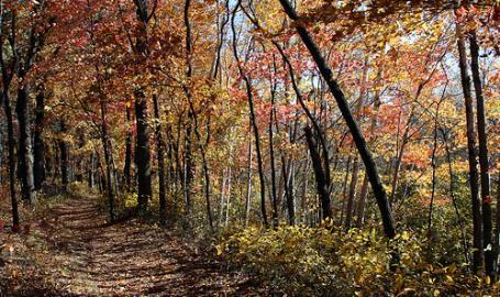 Cowles-Bog_scenery