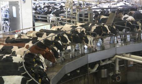 Fair Oaks Farms Things to Do Cow Carousel