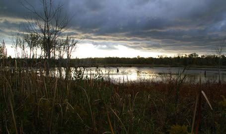 Great Marsh