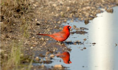 Indiana Dunes Beach Birding