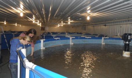 JT Shrimp tanks