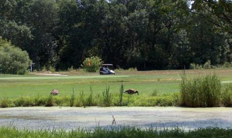 Lake County Parks Outdoors Cedar Creek Golf Cedar Lake