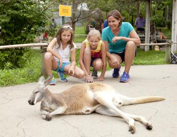 A mother and two daughters croutching near a kangaroo at the Columbus Zoo and Aquarium.
