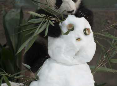 IMAX Pandas 2