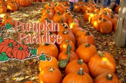 Pumpkin Paradise at Satterwhite Farm