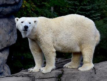 Polar Bear Awareness Weekend
