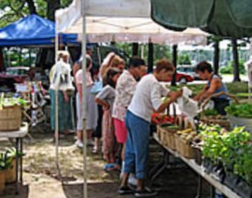 Haines Park Market