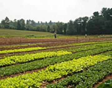 Yankee Bill Farm