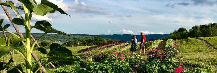 wegmans-organic-farm-2015