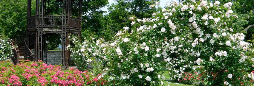 finger-lakes-sonnenberg-canandaigua-grounds-rose-garden-gazebo